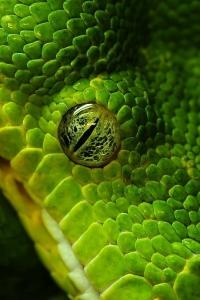 Vorschau Handy Logos Tiere  - Seite 2 Handy Logo