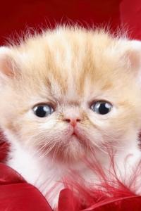 Vorschau LoL Katze Handy Logo