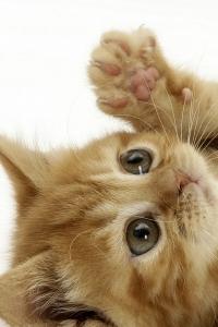 Vorschau Niedlichen Kätzchen Handy Logo