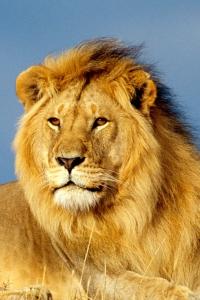 Vorschau Löwe Handy Logo