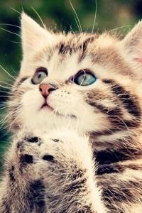 Vorschau Bitte Katze Handy Logo