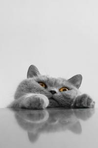 Vorschau Helft mir Katze Handy Logo
