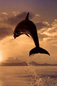 Vorschau Delfin Sonnenaufgang Handy Logo