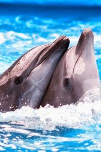 Vorschau Delfine in der Liebe Handy Logo