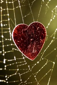 Vorschau Herz im Spinnennetz gefangen Handy-Logo