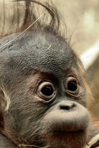 Vorschau Lustigen Baby Affen Handy-Logo