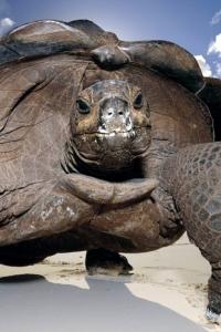 Vorschau Schildkröte Handy Logo
