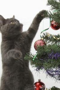 Vorschau Weihnachten Katze Handy Logo