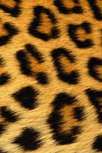 Vorschau Leoparden Streifen Handy Logo