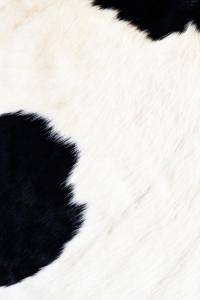 Vorschau Kuhfell Handy Logo