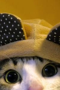 Vorschau Mickey Maus Katze Handy Logo