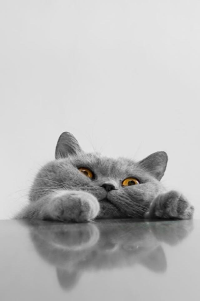 Helft mir Katze Handy Logo, Kostenlos Hintergrundbild auf Dein Handy