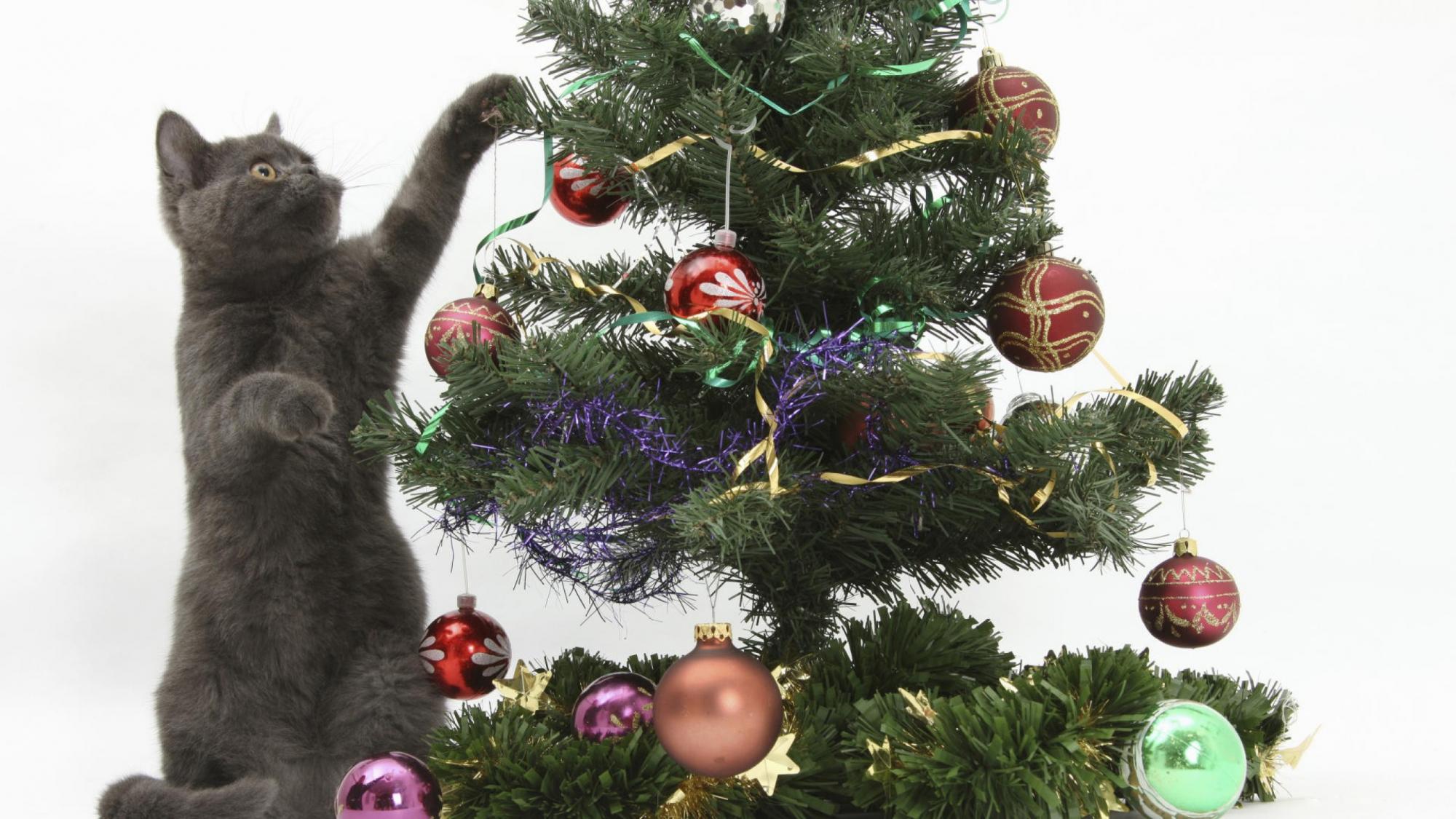 Weihnachten Katze Handy Logo Kostenlose Hintergrundbild Auf